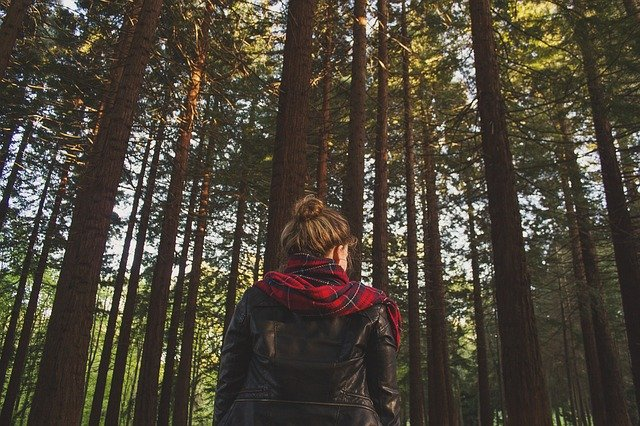 hyvinvointia metsästä